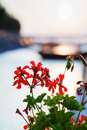 Flowers illuminated by sunlight at dawn over river Royalty Free Stock Photo