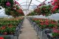 Flowers inside Greenhouse Nursery Stock Image