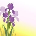 Flowers iris on pink and yellow background