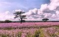 Flowers landscape Stock Photo