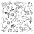 Flowers and leaves of tropical plants, vector, doodle set