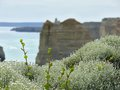 Flowers lichen green escapes background twelve apostles australia victoria great ocean road Stock Images