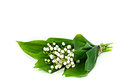 Flowers of lily of the valley bunch white with a few leaves tied up by twine isolated on white background Stock Images