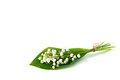 Flowers of lily of the valley bunch white with a few leaves tied up by twine isolated on white background Royalty Free Stock Photos
