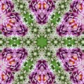 Flowers lines and square, pattern from tiles and border in pink, green  and lilas Royalty Free Stock Photo
