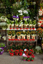 Flowers on the market Royalty Free Stock Photography