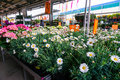 Flowers market in hornbach store romania Royalty Free Stock Photography