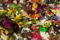 Flowers at martin place a photograph of placed after the sydney siege in december on – december a lone gunman man haron monis Royalty Free Stock Photos