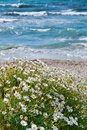 Flowers on a Mediterranean beach Stock Photos