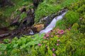 Flowers by a mountain stream Royalty Free Stock Photo