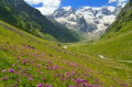 Flowers in mountains this is colorful valley caucasys Stock Images