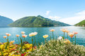 Flowers near lake with swans lugano switzerland summer picture of shore Stock Photo