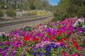 Flowers next to train lines Royalty Free Stock Photo