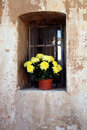 Flowers in niche Stock Photo