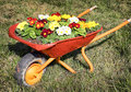 Flowers in an old cart at a meadow Stock Images