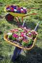 Flowers in an old cart at a meadow Stock Photos