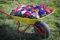 Flowers in an old cart at a meadow Stock Photo