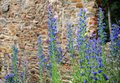 Flowers with an old castle detail of beautiful blue in the background Royalty Free Stock Photography