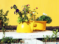Flowers in old yellow teapot and casserole on white wooden table Royalty Free Stock Photo
