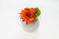 Flowers orange flower in the vase Royalty Free Stock Photos