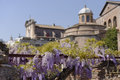Flowers outside ruins of ancient Rome, Italy Royalty Free Stock Photo