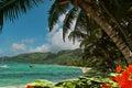 Flowers, palm-trees on paradise lagoon beach Stock Photos