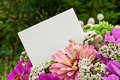 Flowers pink and white card Stock Photo