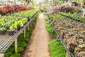 Flowers and plants in green houes interior of a greenhouse full of growing Stock Images