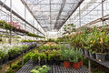 Flowers and plants in green houes interior of a greenhouse full of growing Royalty Free Stock Photography