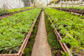 Flowers and plants in green houes interior of a greenhouse full of growing Royalty Free Stock Image