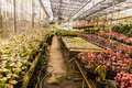 Flowers and plants in green houes interior of a greenhouse full of growing Royalty Free Stock Images