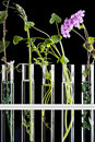 Title: Flowers and plants in test tubes