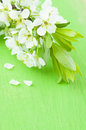 Flowers of plum on a green background Royalty Free Stock Photos
