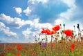 Flowers Poppy On A Background ...