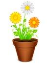 Flowers In A Pot.