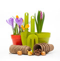 Flowers in pot and garden tools isolated on white Royalty Free Stock Photo