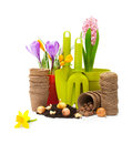 Flowers in pot and garden tools isolated on white Stock Photos