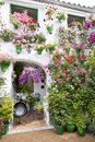 Flowers pots standing in a Andalusian patio. Royalty Free Stock Photo