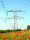 Flowers and power wires Royalty Free Stock Photo