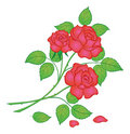 Flowers red rose Royalty Free Stock Photo