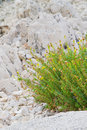 Flowers on the rocks Royalty Free Stock Photo
