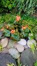 Flowers on the rocks