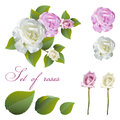 Flowers and rose buds
