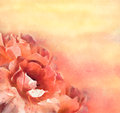 Flowers roses in pastel artistic floral background with blooming Stock Images