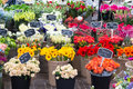 Flowers for sale at Dutch flower market, Amsterdam, Netherlands Royalty Free Stock Photo