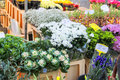 Flowers for sale at a Dutch flower market Royalty Free Stock Photo