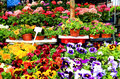 Flowers for sale on market displayed Stock Photo