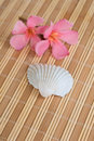 Flowers and seashell on bamboo mat Royalty Free Stock Photo