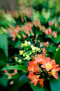 Flowers in selective focus Royalty Free Stock Photography