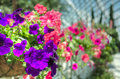 Flowers in selective focus amidst budding neighbors Stock Image
